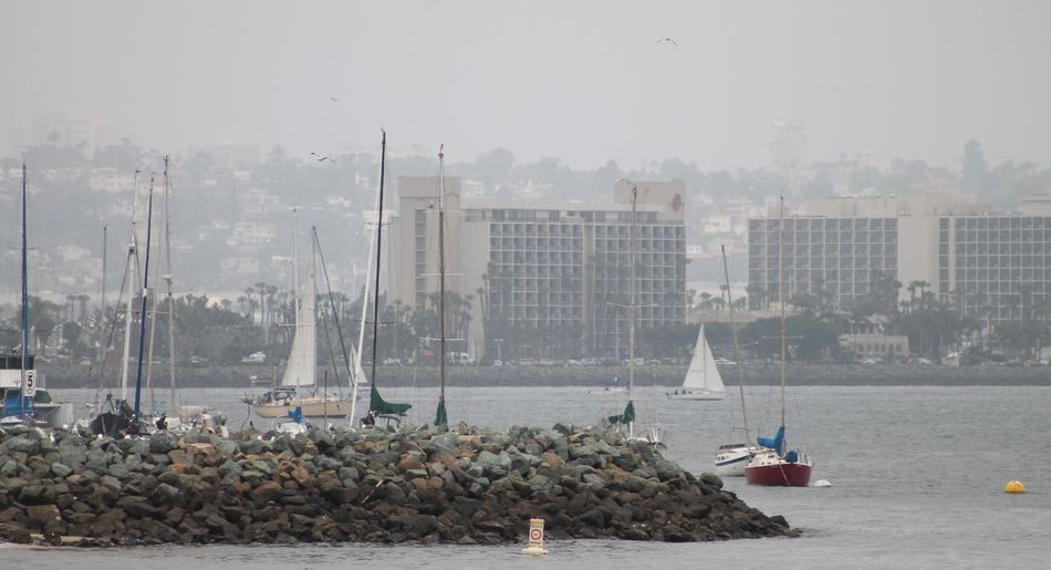 Summertime Family Get Together Beautiful Fishing Boats Beautiful Sail Boats Beautiful Sea Life Buildings All Around Calm Bay Downtown San Diego In Back Ground Harbor View Overcast Day