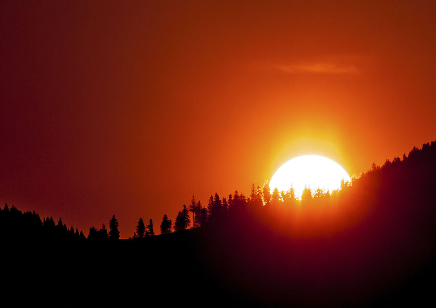 Red Tranquility Fir Forest Fir Trees Forest Mountain Orange Color Sun Sunset