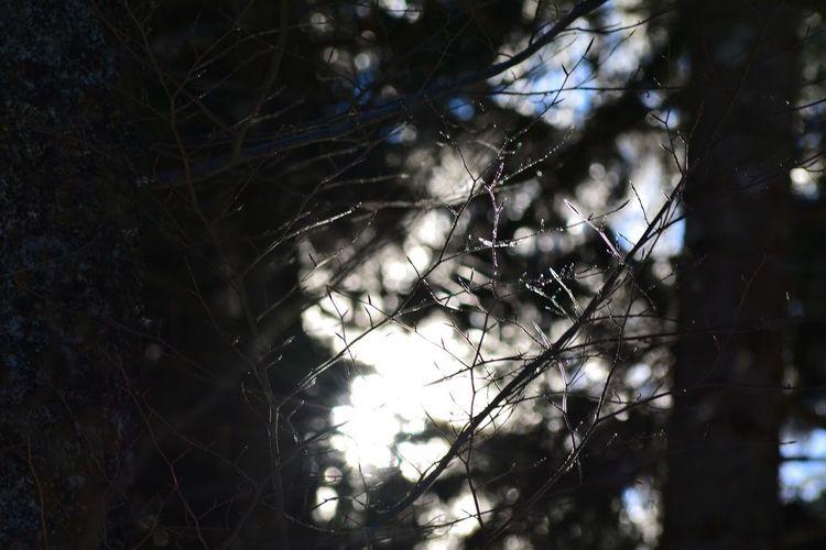 MONTAGNE Tree