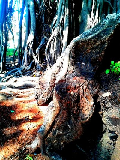 Imagem Celular PetitsDetails Close-up Plant Raizes Nature Beauty In Nature