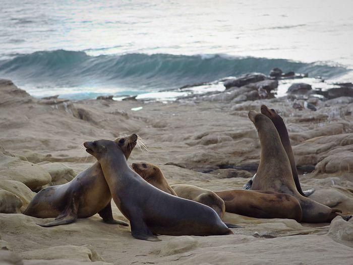 Seals on rock at beach