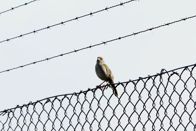 Bird perching on chainlink fence against sky