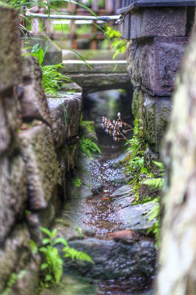 参道の端っこ 一目惚れんず 善光寺 (zenko-ji Temple) Moss Plant Day Outdoors No People Tree Trunk Nature Water Animal Themes Tree Beauty In Nature Mammal おはよ☀あち~