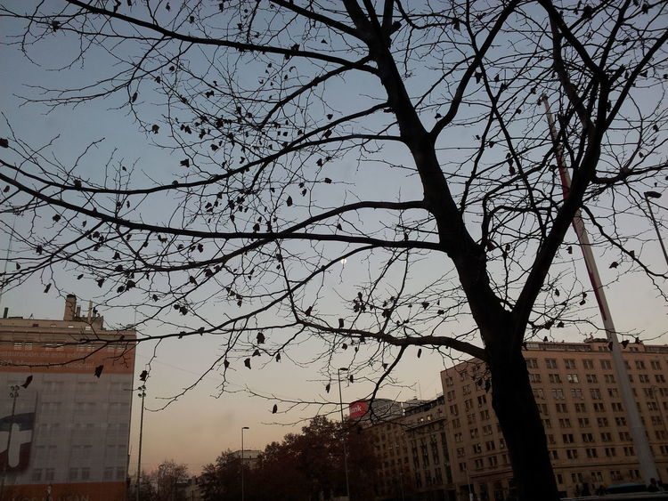 I just love the Moon behind the Branches of the Tree 😊😆 Contrasts Light And Shadow Afternoon Autumn Skylovers Sky City Cityscape Perspective No People EyeEm Happy Relaxing