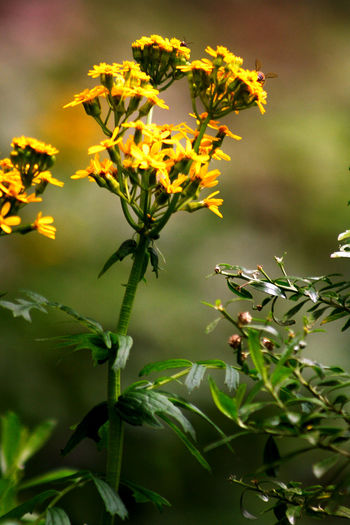 Only flower. Botany Close-up Day Flower Focus On Foreground Fragility Nature Petal Plant Selective Focus