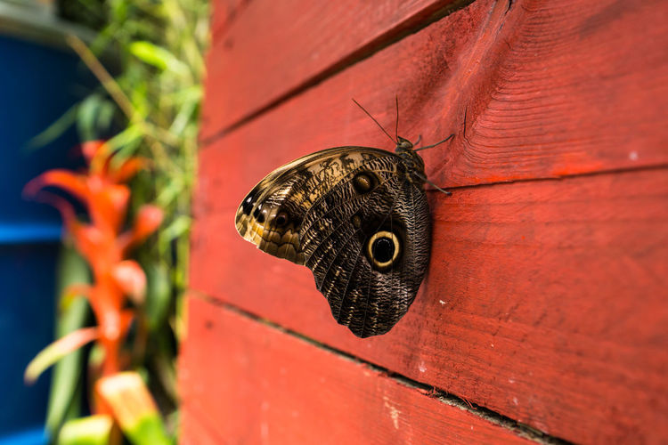 Close-up of butterfly on orange wall