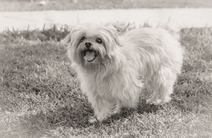 Blackandwhite Day Dog Dog Love Dog Lovers Dogs Domestic Animals Enjoying Life Exceptional Photographs Eye4photography  EyeEm Best Shots Family Time Monochrome Nature No People One Animal Outdoors Pets Photoshoot Popular Photos They Are Family