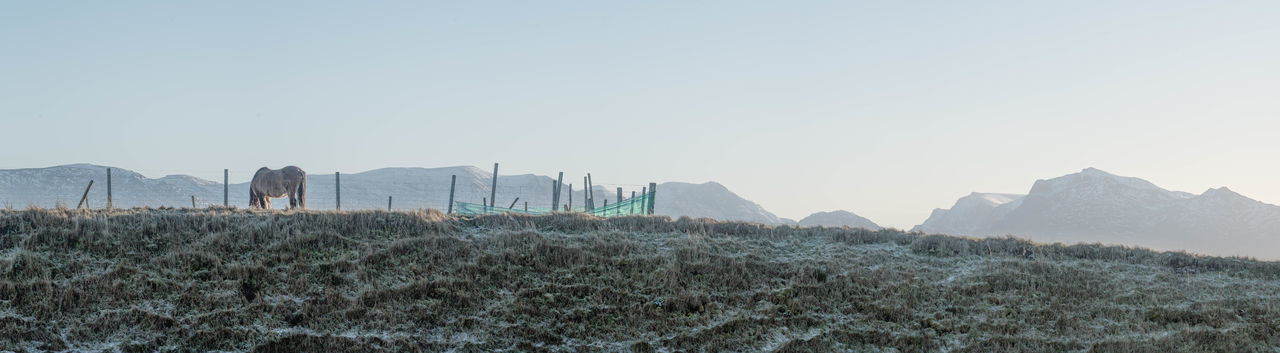Frosty field with horse Nature Colours Of Nature Winter Colours  Photo Merge Photography Panoramic Animal Clear Sky In Winter Day Farm Animal Frosty View Horse In Frosty Field Mountains And Sky No People