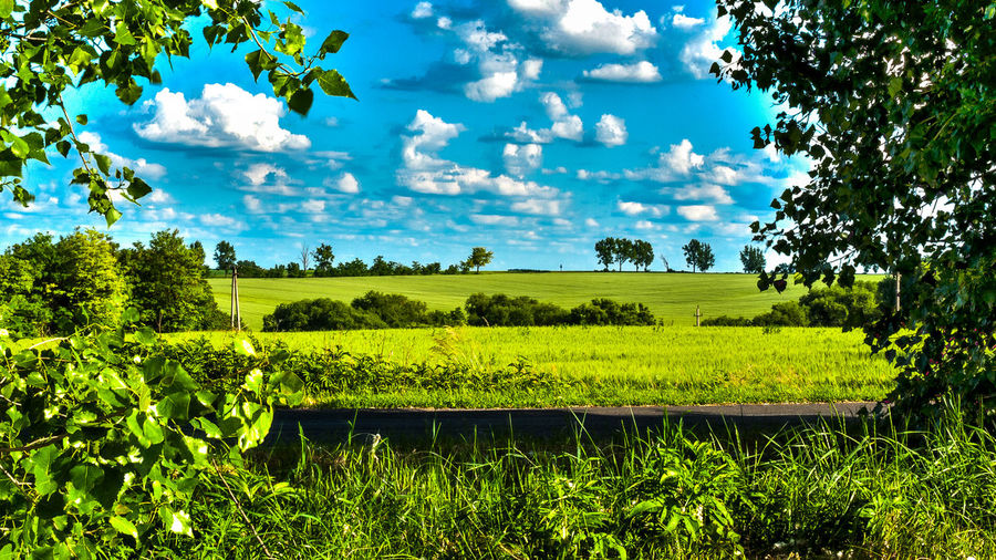 over the road Beauty In Nature Cloud Cloud - Sky Cultivated Land Field Green Color Landscape Nature Rural Scene Sky Springtime Tranquil Scene Tranquility Tree