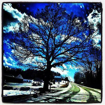 Majestic in #miltonvt. #vt Milton_vt Miltonvt Landscape Vt_scene Tree Shadows Silhouette Landmark Perfect Vermont Icon Bluesky Majestic Vt Btv Vt_scenery 802