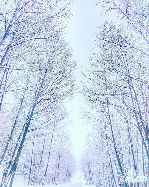 Tree Low Angle View No People Nature Beauty In Nature Close-up Outdoors Day 自然 林 樹 木 Naturelandscapes 北海道 Hokkaido Japan Road 道 Winter Beauty In Nature Nature Tree Snow Winterlandscape Snowlandscape