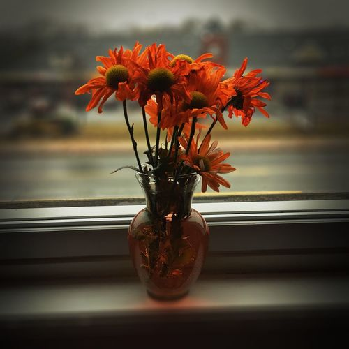 🧡🧡🧡 RainyDay Orange Flower Vase Window Indoors  Close-up