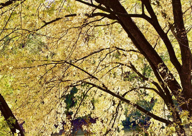 Low angle view of flowering tree during autumn
