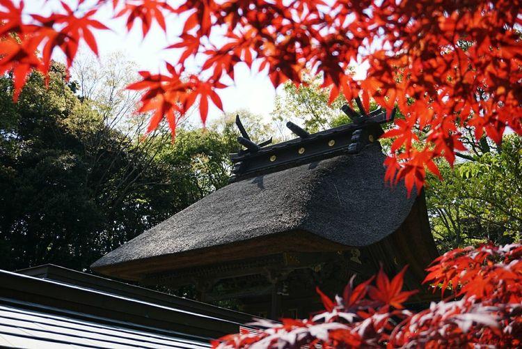 Oarai 大洗 大洗磯前神社 Shrine Of Japan