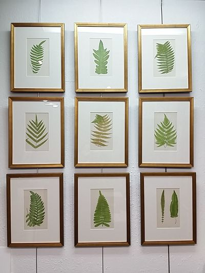 EyeEm Selects Picture Frames Ferns 🌾 Leaf No People Antique Plate Indoors  Plant Furniture Ideas Decor Decorative Art interior design interior decor.