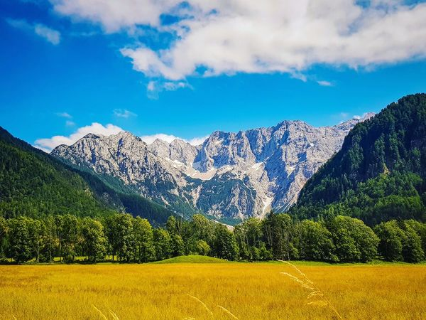 Short Travel to Slowenien, so Beautiful! Landscape Landscape_Collection Landscape_photography Photography Photooftheday Mountain Peak Mountain Mointain View Travel Photography Travel Destinations Slowenia Europe Tree Yellow Blue Rural Scene Agriculture Cloud - Sky Pine Tree Flower Head