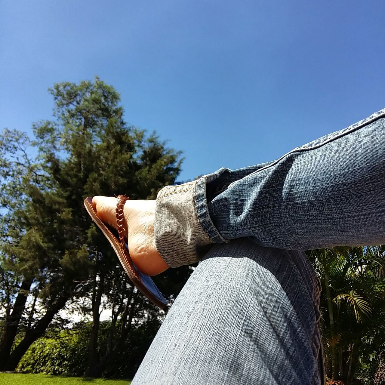 tree, one person, low section, real people, human leg, jeans, day, outdoors, human body part, low angle view, clear sky, nature, sky, close-up, people