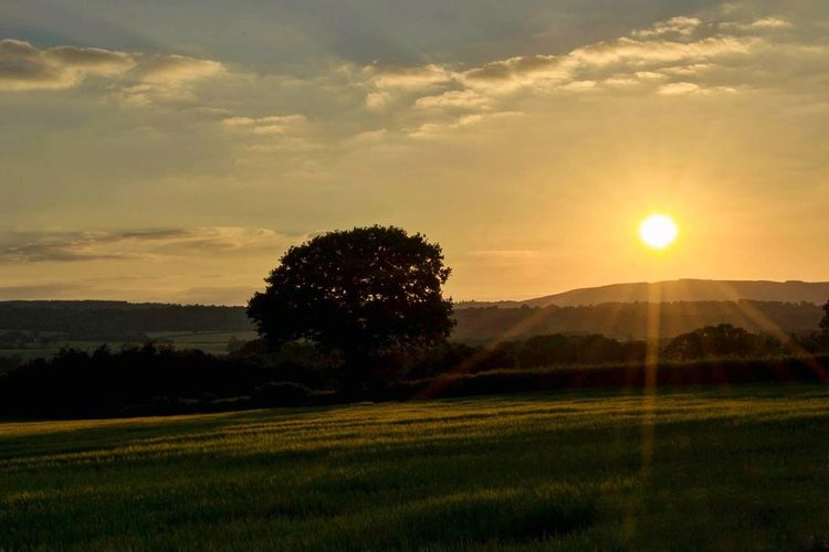 The Summer Solstice Agriculture Beauty In Nature Cloud - Sky Day Field Grass Growth Landscape Nature No People Outdoors Rural Scene Scenics Sky Summer Solstice Sunbeam Sunset Tranquil Scene Tranquility Tree