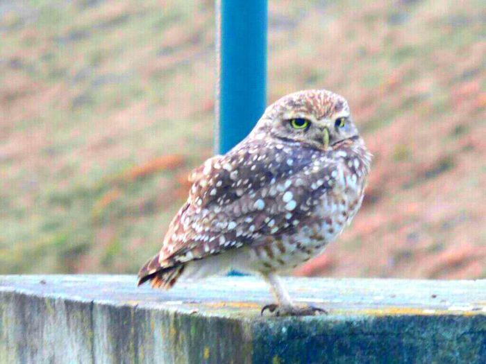 Owl Owls💕 I Love Owls  Relaxing Enjoying Life Taking Photos