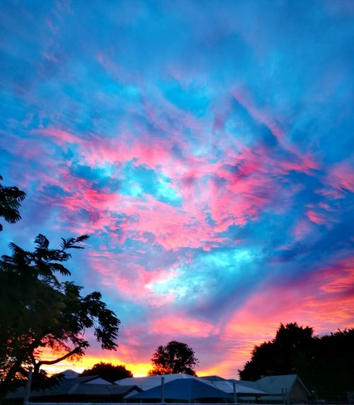 Tree Multi Colored Sunset Forest Blue Silhouette Pinaceae Power In Nature Sky Blood Orange Dramatic Sky Atmospheric Mood Meteorology Cloudscape Romantic Sky