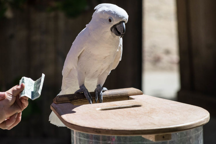 The White Parrot Animal Background Bird Close-up Focus On Foreground Holding Nature Nature Background One Animal Outdoors Parrot Redding, Ca Seagull Selective Focus Sundial Bridge Table Turtle Love White Bird Wildlife Zoology