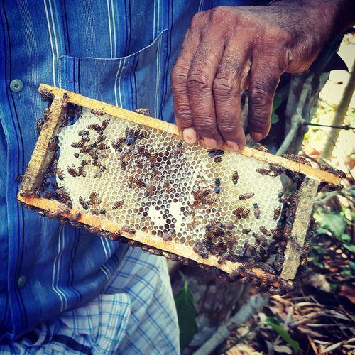 Bee Love 🐝💓 Samsungphotography Samsunggalaxya72018 Kerala Kottayam EyeEm Nature Lover EyeEm Gallery Human Hand Working Men Close-up Beehive Honeycomb Honey Bee Honey Farmer