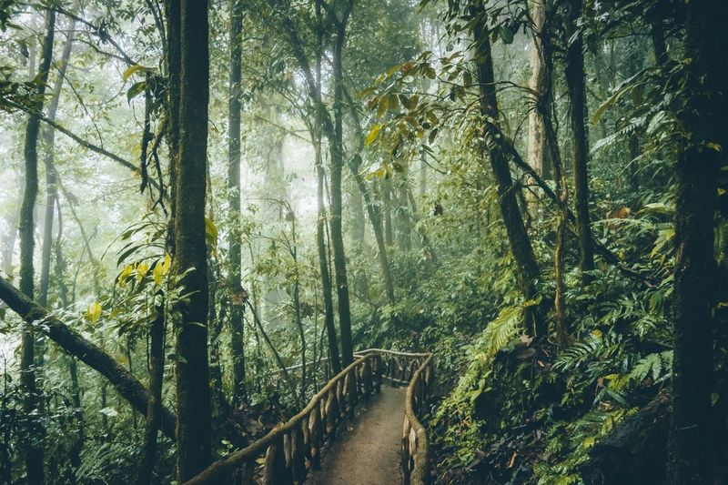 Nature's Diversities Landscape_Collection Trees Costa Rica Light Fog