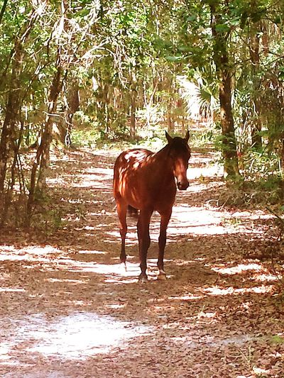 Paynes Prairie Mustang Horse Nature No People Wild Horse 441 Micanopy Paynes Prarie Preserve Gainesville Fl Alachua County Florida Miles Away The Great Outdoors - 2017 EyeEm Awards Live For The Story