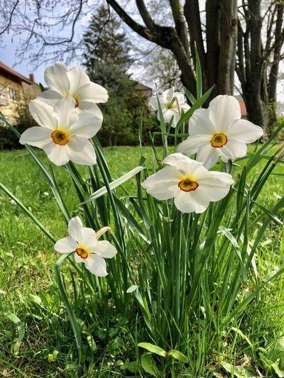 Ostern 2019 naht Plant Flower Flowering Plant Freshness Growth Fragility Vulnerability