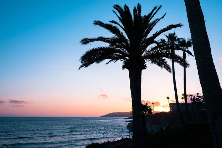 California Dreamin' // Back Lit Beach Beauty In Nature California Copy Space Horizon Over Water Idyllic Nature Ocean Orange Color Outdoors Palm Tree Romantic Scenics Sea Shadows & Lights Shore Silhouette Sky Sun Sunlight Sunset Tranquility Vacation Water