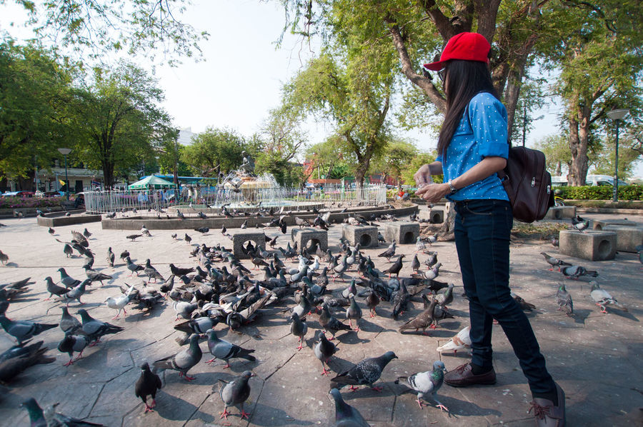 Casual Clothing Day Full Length Leisure Activity Lifestyles Low Section Men Nature Outdoors Person Pigeons Rear View Shoe Standing Street Travel Tree Walking Woman