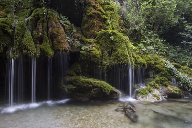 Plant Waterfall