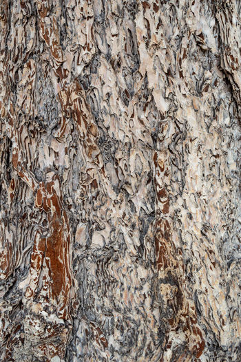 Tree Bark Background Texture Abrasive Tree Bark Tree Trunk Abstract Backgrounds Brown Close Up Close-up Day Graphic Resource Natural Pattern Nature No People Outdoors Pattern Rough Speckled Textured  Textured Effect Tree Bark Patterns Tree Bark Texture