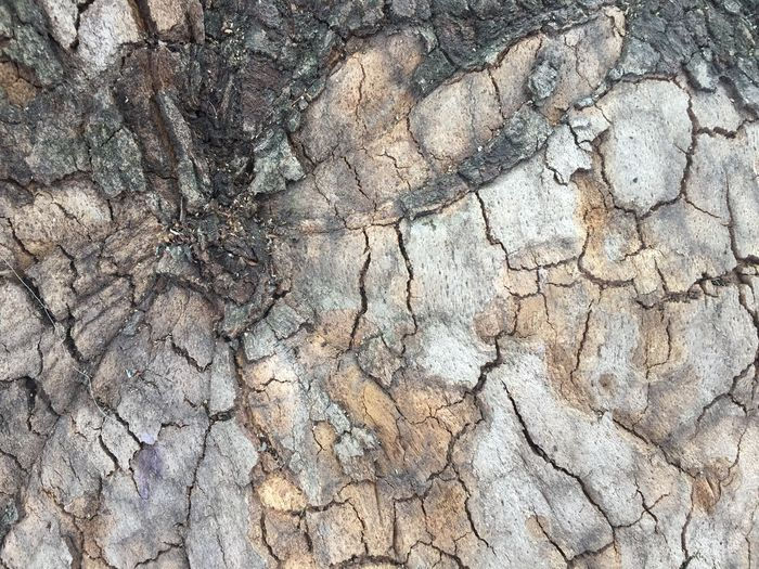 Abstract Textured  Backgrounds Cracked Geology Nature Close-up