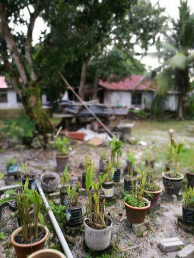 My village Growth Plant Tree Close-up Beauty In Nature Pantai Remis Perak