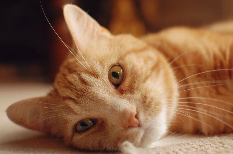 Cats Cute Pets Cute Cats Pets