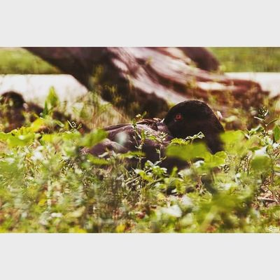 Michaellangerfotografie Animal Duck Fotografie Photography Photographyislife CripixtMovement
