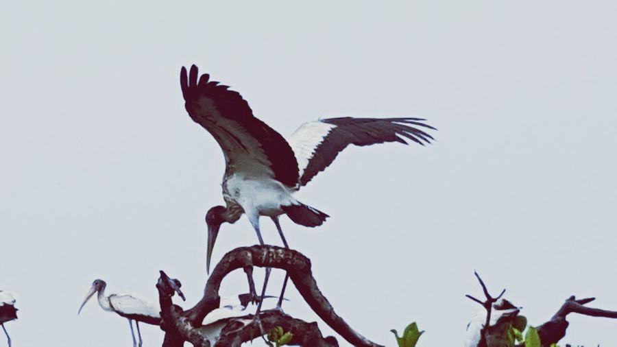 Stork Stork