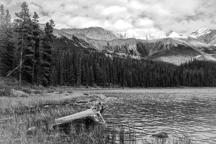 Alberta Alberta Canada Animal Themes Beauty In Nature Black & White Day Grass Growth Landscape Monochrome Mountain Nature No People Outdoors Scenics Sky Tranquil Scene Tranquility Tree Water The Great Outdoors - 2017 EyeEm Awards