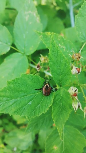 Leaf Green Color Nature Close-up Beetle Plant Outdoors Beauty In Nature Leaves_collection