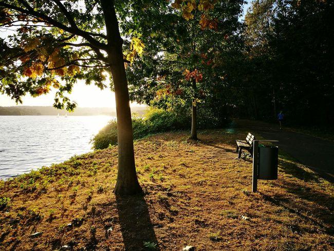 Sunlight Bench Nature Relaxation Baldeneysee Essen