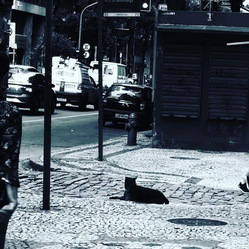 View of cat on street in city