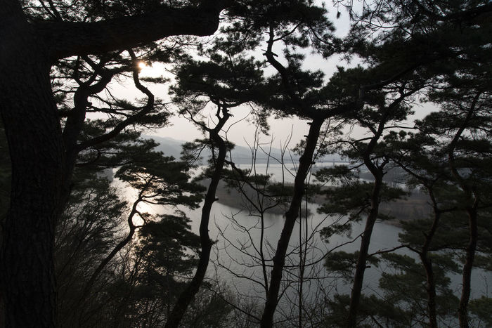 view at Tangeumdae in Chungju, Chungbuk, South Korea Afternoon Beauty In Nature Branch Day Forest Growth Low Angle View Namhangang Nature No People On The Cliffs Outdoors Pine Trees River Riverside Scenics Sky South Han River Tranquility Tree Tree Trunk Water