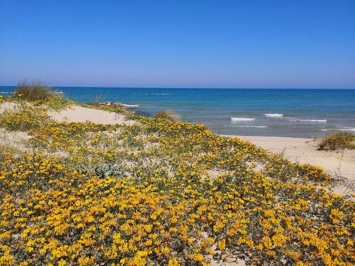 Flowers, Nature And Beauty Flowers Water Wave Clear Sky Sea Beach Sand Dune Sand Yellow Horizon Blue Seascape Coast