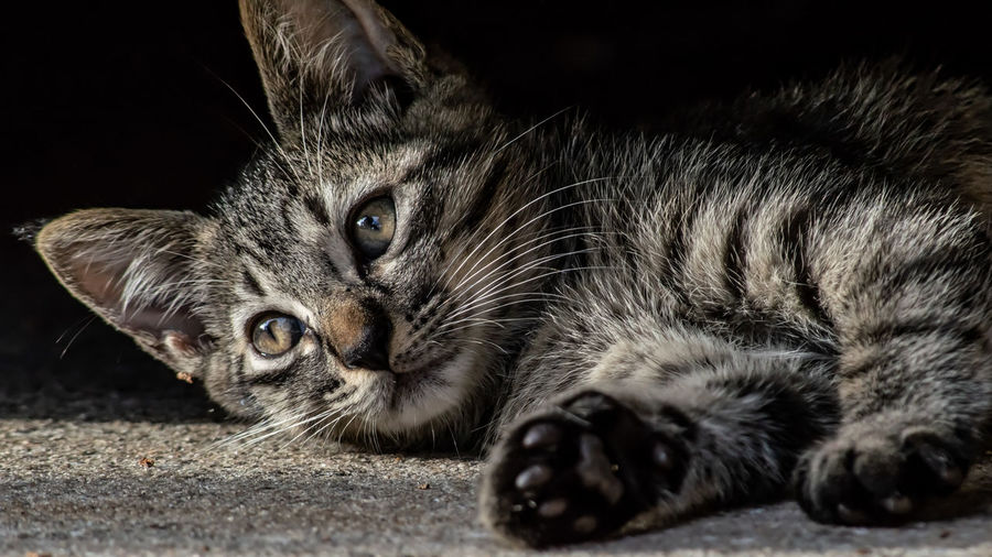 Domestic Pets Domestic Cat Domestic Animals Cat Feline One Animal Whisker Close-up