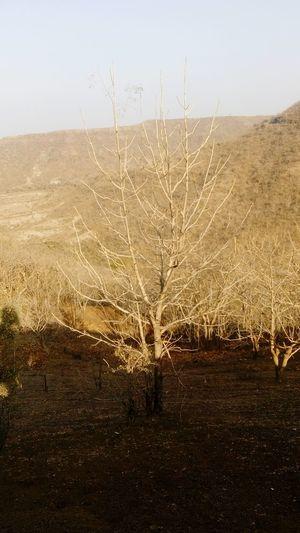 Summer Happened Its Drying half dry tree