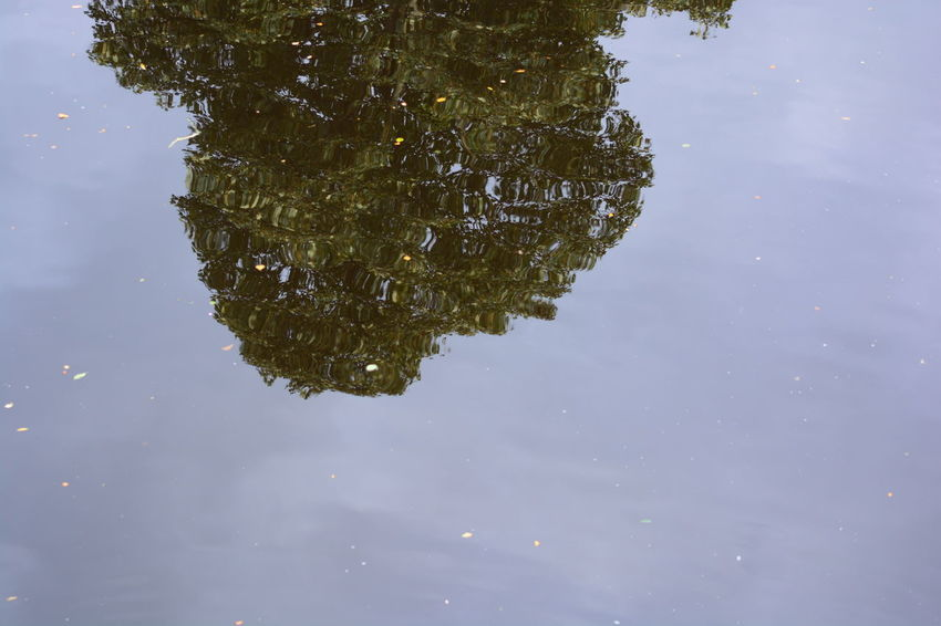 Reflection Daytime River Allmyphotography Knaresborough No People Green Color Outdoors Nature Beauty In Nature