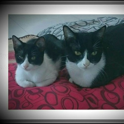 Cat Lovers 🐱💞 Black & White Photo Nature Forever Toto Y Tina Love