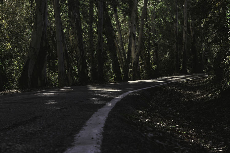 The curve Asphalt Autumn Curve Lines Road Road In The Forest Beauty In Nature Day Fall Forest Forest Trees Growth Nature No People Outdoors Road Road Sign Scenics The Way Forward Tranquil Scene Tranquility Tree Way White Line