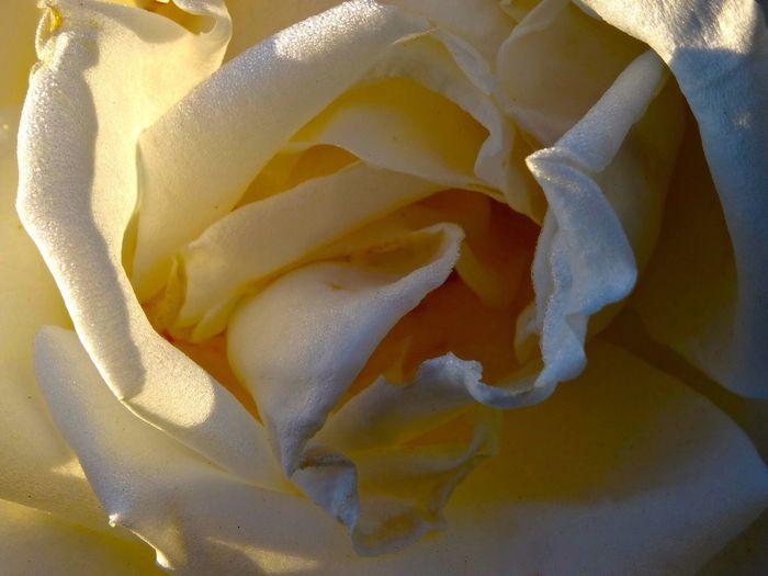 Macro_collection macro_collection Nature_collection Flowerporn